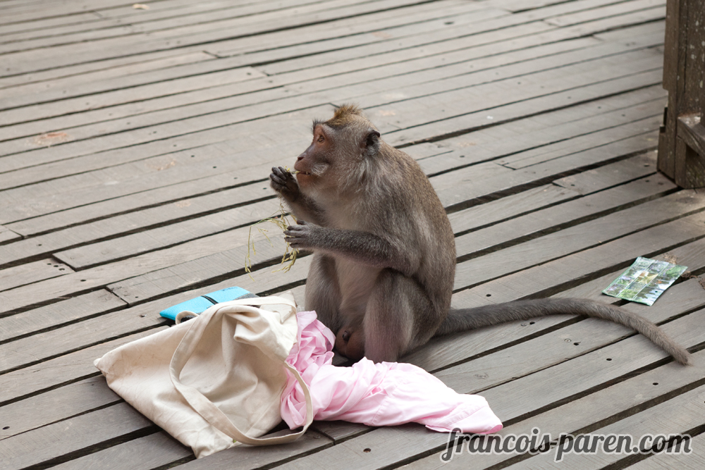 singes voleurs Monkey Forest Ubud Bali