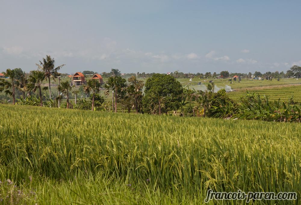 rizière Canggu Bali