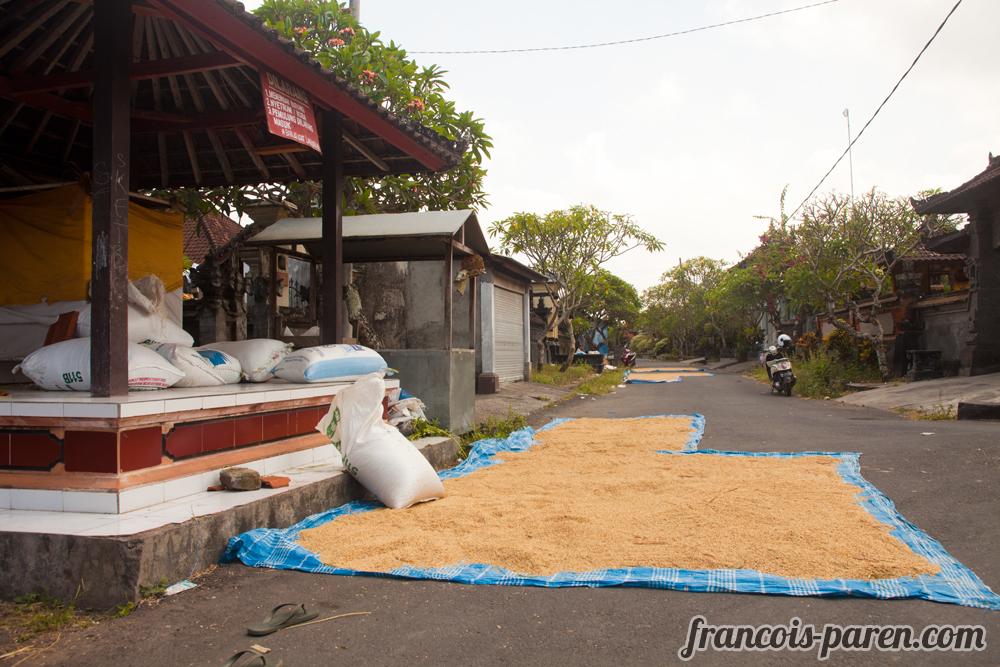 sechage du riz Tanah Lot
